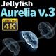 Jellyfish Aurelia 3 - VideoHive Item for Sale