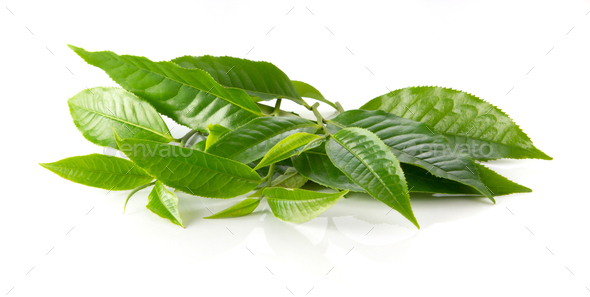 Green Tea Leaves On White Background Stock Photo By Poungsaed Eco