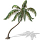 Palm -00007
