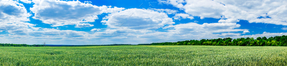 Wonderful green field by spring time. - Stock Photo - Images
