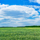Wonderful green field by spring time. - PhotoDune Item for Sale