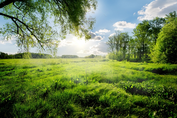 Spring in the forest - Stock Photo - Images