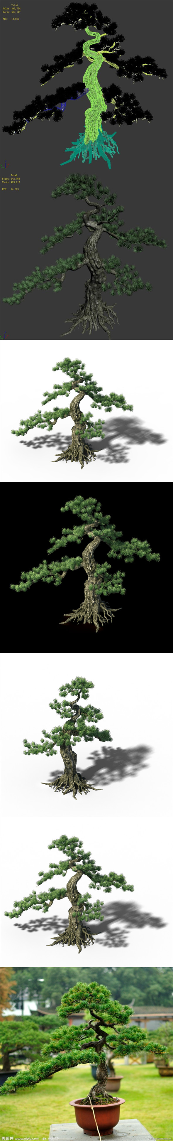 Trees - Huanglongshan Pine 01 - 3DOcean Item for Sale