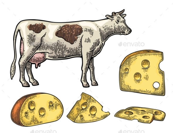 Pieces of Cheese and Dairy Cow - Food Objects