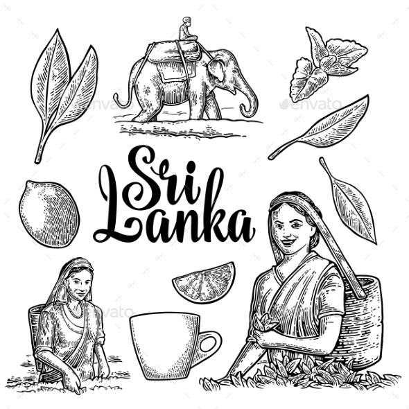 Female Tea Pickers Harvesting Leaves - Flowers & Plants Nature