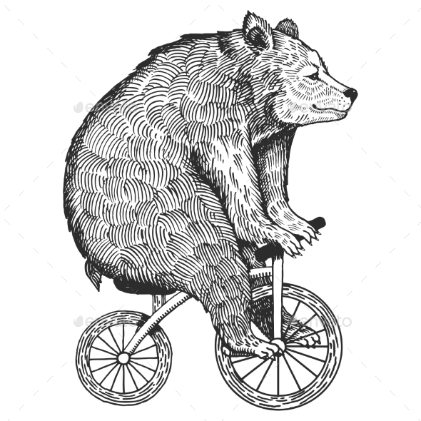 Bear on Bicycle Engraving Style Vector - Animals Characters