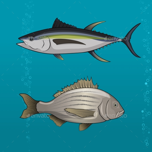 Common Tune and Seabream. Vector Illustration - Animals Characters