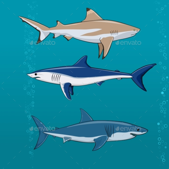 Common Sharks Set Vector Illustration - Animals Characters