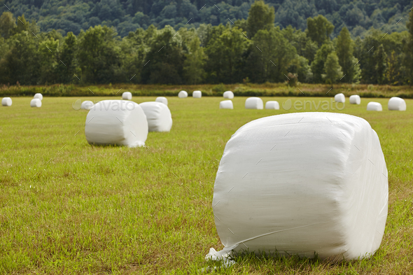 Packed fresh grass in the countryside. Norwegian landscape. Agriculture background. Horizontal - Stock Photo - Images