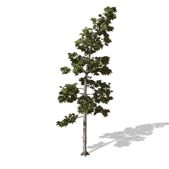 Tree - 00008 - 3DOcean Item for Sale