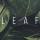 Leaf Transition - VideoHive Item for Sale