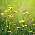 Meadow flowers closeup - PhotoDune Item for Sale