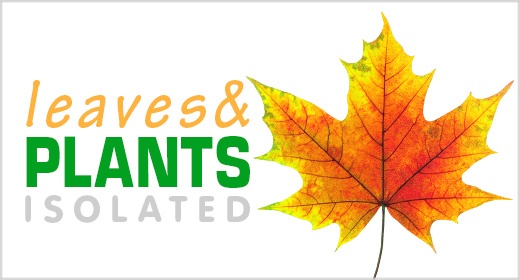 Leaves & Plants