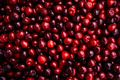 Cherries background. Sweet red cherries
