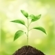 Small Green Sprout - GraphicRiver Item for Sale