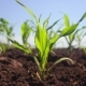 Plants Are Beginning To Grow on a Field - VideoHive Item for Sale
