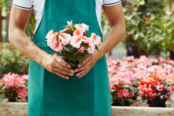 Portrait Of Man Working As Florist In Flower Shop Holding Bucket - Stock Photo - Images