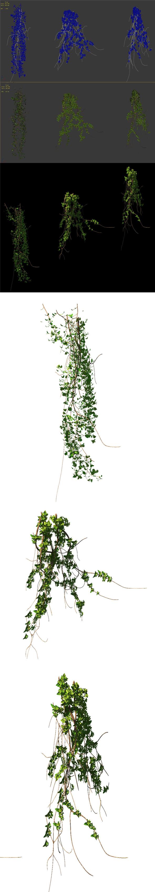 General plant - vines 02 - 3DOcean Item for Sale