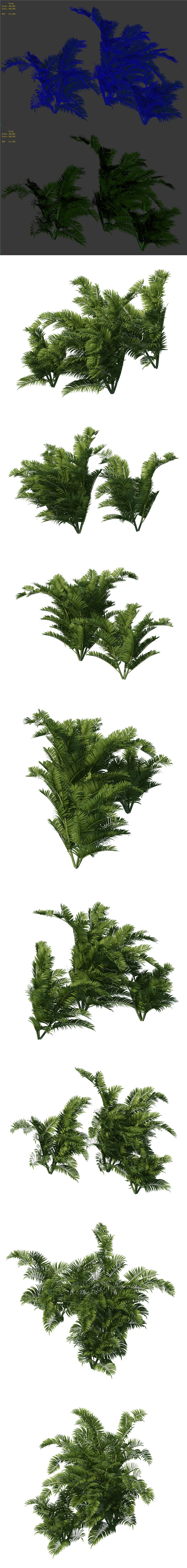 Plant - tropical tree - 3DOcean Item for Sale