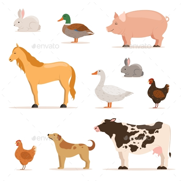 Different Domestic Animals on Farm. - Animals Characters