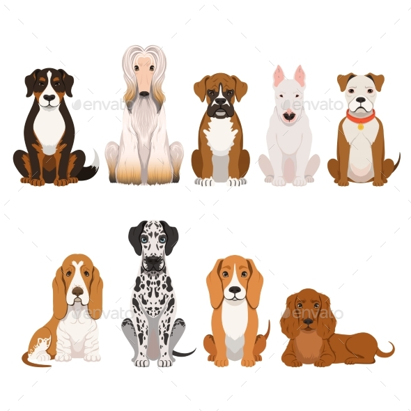 Different Breeds of Dog. Group of Domestic Animals - Animals Characters