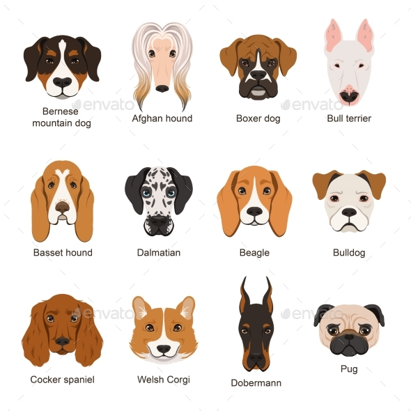Different Dogs. Vector Illustrations Set Isolate - Animals Characters