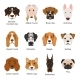 Different Dogs. Vector Illustrations Set Isolate - GraphicRiver Item for Sale