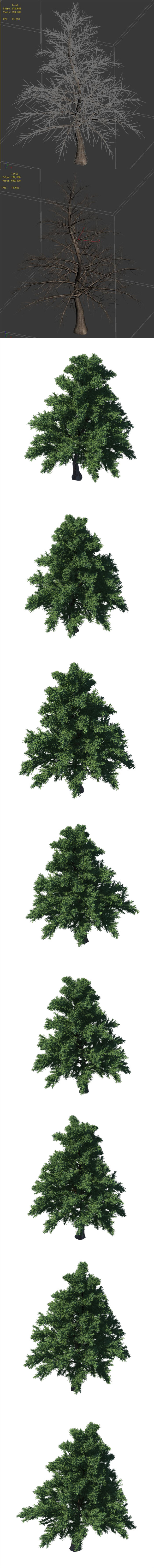 Plant - Pine 36 - 3DOcean Item for Sale