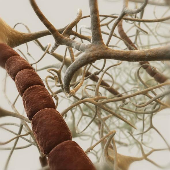 Neurons. Closed neural network 3D model - 3DOcean Item for Sale