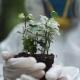 Ecologist Holding Plant
