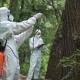 Ecologists Applying Treatment on Tree