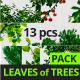 Leaves of Trees Pack - VideoHive Item for Sale