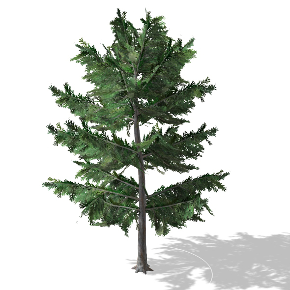 Tree - 00012 - 3DOcean Item for Sale