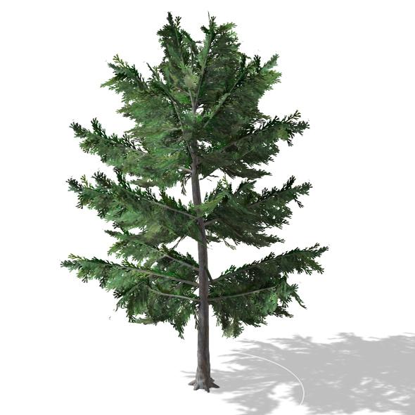 Tree - 00012 - 3DOcean Item for Sale