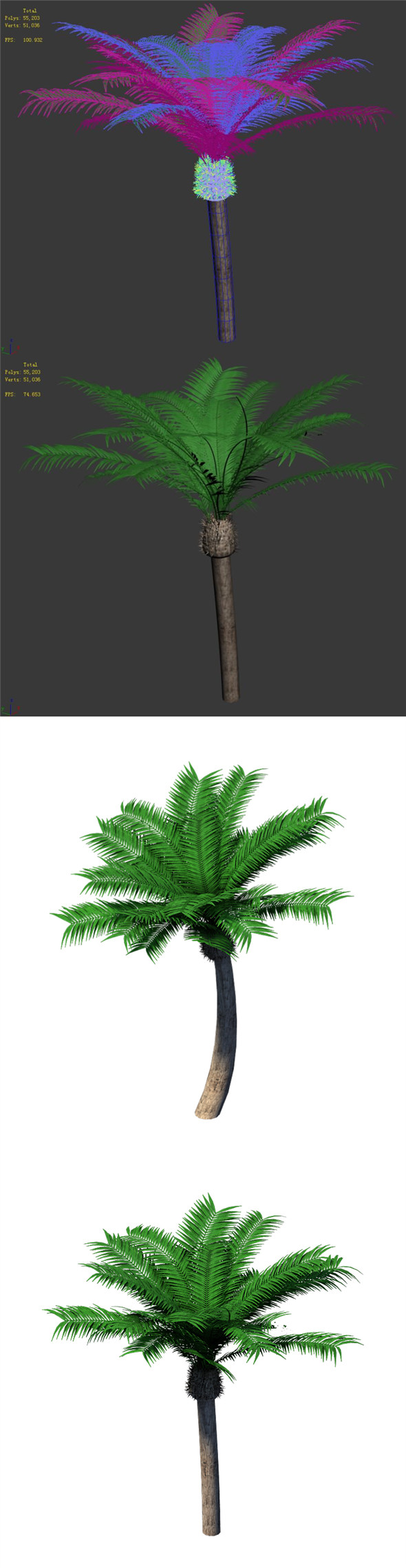 Plant - Coconut Tree 32 - 3DOcean Item for Sale