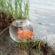 Goldfish in the Aquarium on the Riverwalk