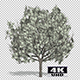 Growing Dollar Money Tree - VideoHive Item for Sale