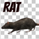 3D Running Rat - VideoHive Item for Sale