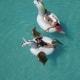 Aerial - Beautiful Girls in a Bikini on an Inflatable Pegasus and Unicorn Mattress in the Pool