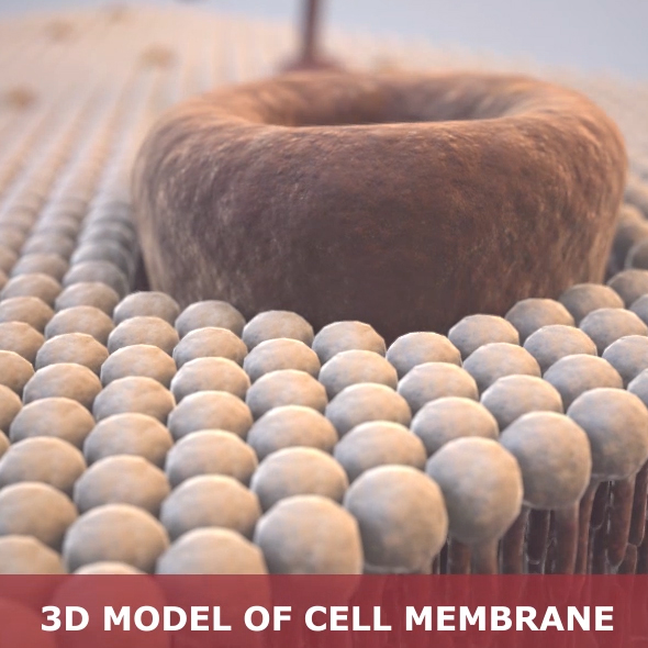 Cell membrane - 3DOcean Item for Sale