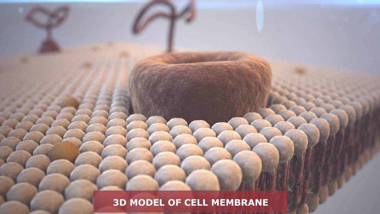 Cell Membrane By Eddiedie 3docean