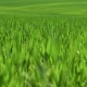 Field of Green Grass - VideoHive Item for Sale