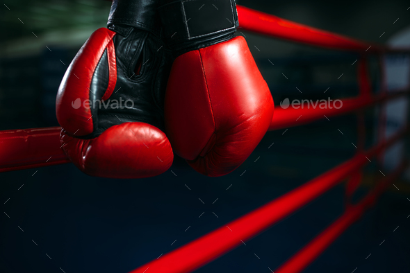 Gloves on the ring ropes, boxing concept, nobody - Stock Photo - Images