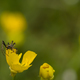 spider on yellow flower - PhotoDune Item for Sale