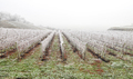 Frost covered vineyard in winter - PhotoDune Item for Sale
