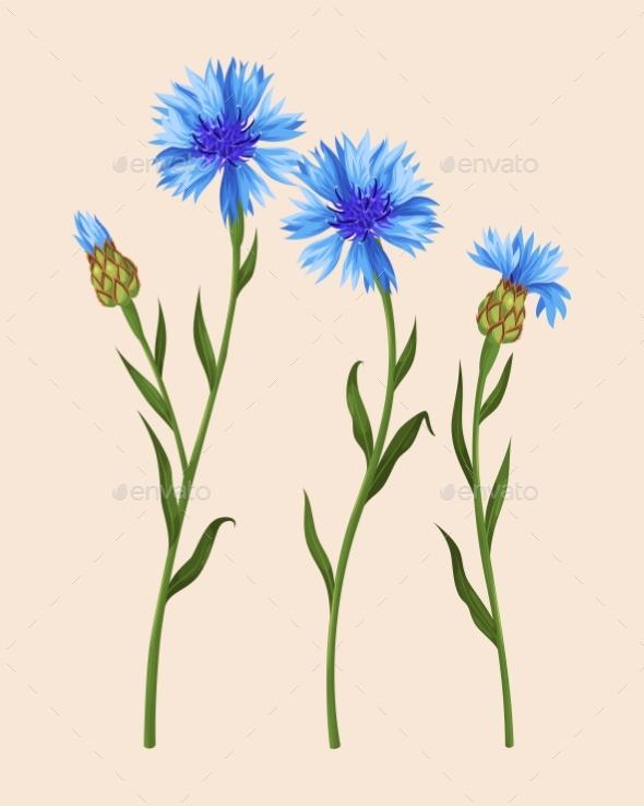 Set of Cornflowers - Flowers & Plants Nature