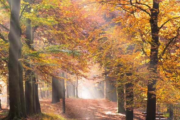 Sunbeams through the leaves in an autumn forest - Stock Photo - Images