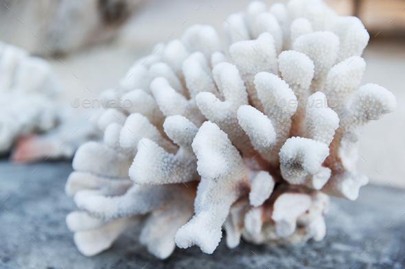 hard stony coral - Stock Photo - Images