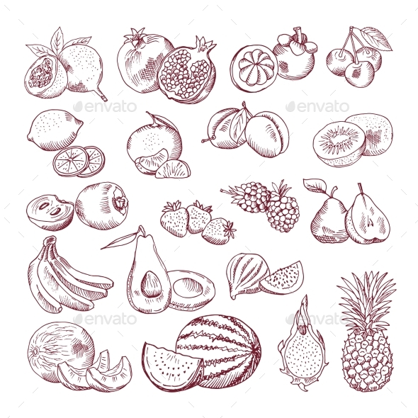 Vector Sketch Fruits for Package Design - Food Objects