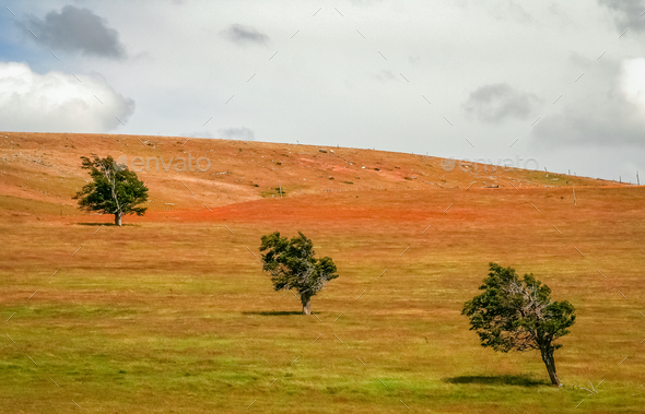 Three trees on a field - Stock Photo - Images